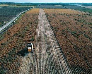 Türk tarımı dünya markası olacak