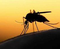 Uzman isimden korkutan sivrisinek uyarısı! Yaz aylarında...