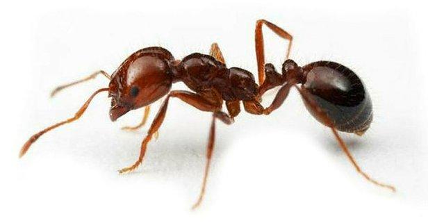 Rüyada Karınca Görmek Ne Anlama Gelir