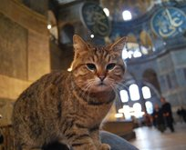 Vali Yerlikaya'dan kedi 'Gli' paylaşımı