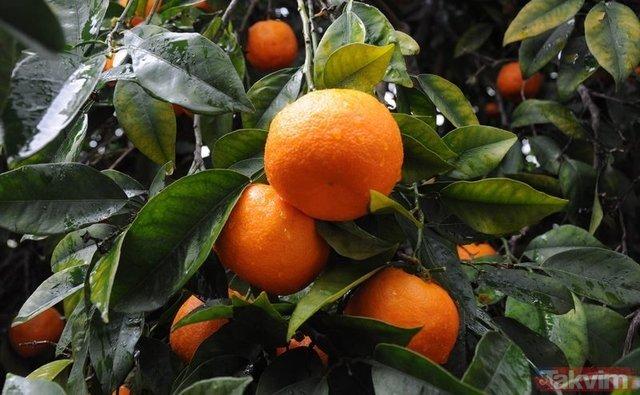 Grip ve soğuk algınlığına karşı tüketilmesi gereken besinler