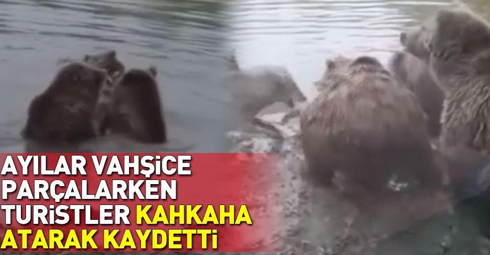 Ayılar yakaladıkları kurdu paramparça ettiler
