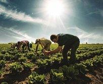 Yüz binlerce çiftçiye müjde! Bakan açıkladı