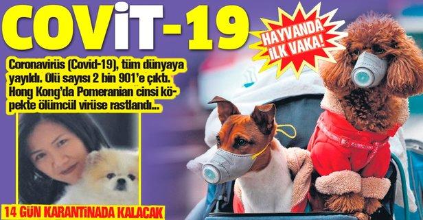 Cov'it'-19!