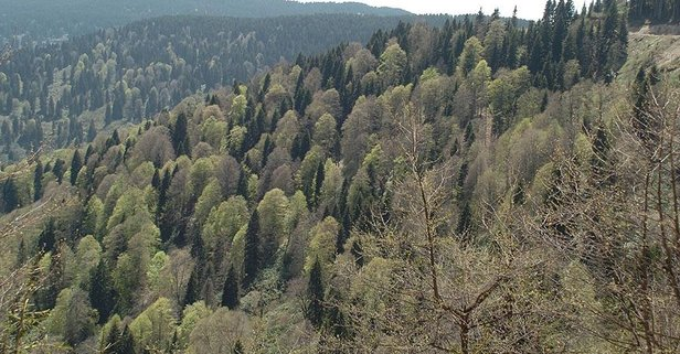 Piknik, mesire yerleri, orman gitmek yasak mı?