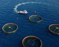 Trabzon'da yapılan su ürünleri ve mamülleri ihracatı yüzde 93 arttı