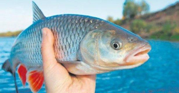Parkinson'un ilacı balık