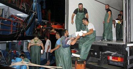 İnebolu Limanı'nda palamut bolluğu! Balıkçıların yüzü gülüyor