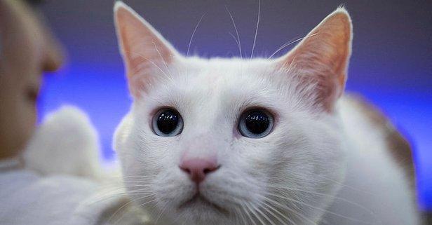 Rüyada Kedi Görmek Ne Anlama Gelir