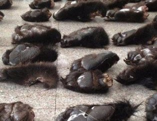 İnsanların ne kadar acımasız olduğunu gösteren hayvan katliamı fotoğrafları