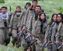 Teslim olan teröristler aynı adresi işaret etti! Önce HDP, sonra Kandil!