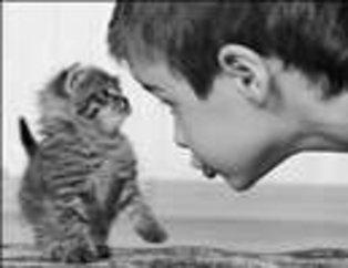 Çocuklarla Hayvanların Muhteşem Uyumu