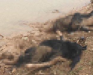 Hatay'da korkunç olay! 3 kadın cesedi bulundu