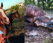 Ünlü yarış atını katlettiler! İç organlarını ise...