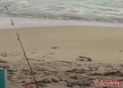 Dev timsah köpek balığını yedi! O anlar sosyal medyayı salladı