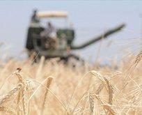 Tarım Kredi çiftçilerden 1.6 milyarlık ürün aldı