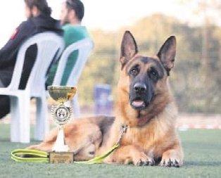 Şampiyon Arec
