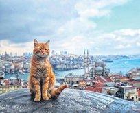 Kediler şehri İstanbul