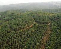 21 yılda Fransa'dan büyük orman yetişti