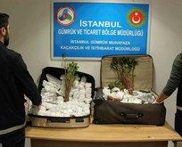 İstanbul Havalimanı'nda khat cinsi uyuşturucu