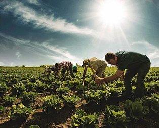 Çiftçinin ürünü tek elde toplanacak