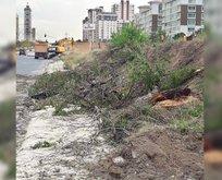 Çevrecilik ahkâmı kesen CHP, yol uğruna ağaçları katletti!