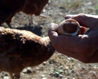 Tam ağzına atıyordu ki... Yumurtanın içinden...