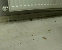 Apar topar evi terk ettiler! Sultangazi'de dev fare kabusu
