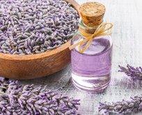 Lavanta yağı romatizmanın ilacı