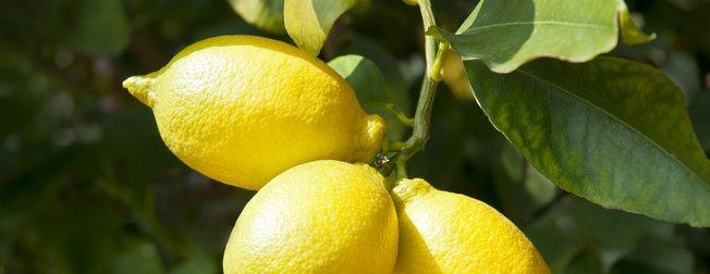 Vücuttaki yağ nasıl atılır? İşte 5 günde 3 kilo verdiren limon diyeti...