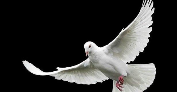 Rüyada Güvercin Görmek Ne Anlama Gelir