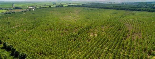 Türkiye'de 14 yılda 3 milyar 750 milyon ağaç dikildi
