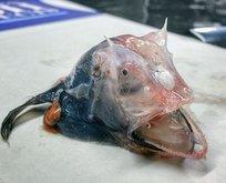 Korkunç balıklar herkesi şok etti
