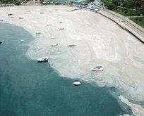 Deniz salyası nedir, nasıl temizlenir?