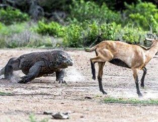 Vahşi doğada nadir anlar görüntülendi!