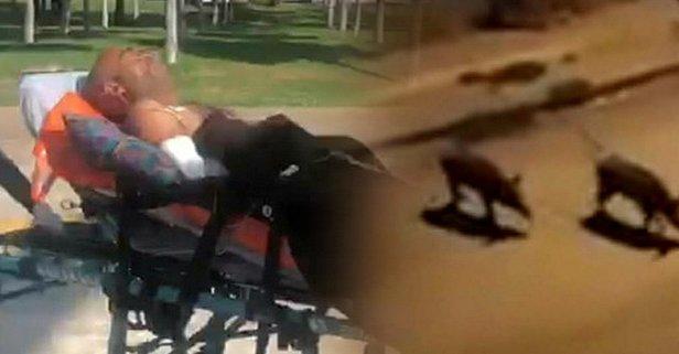 Domuz saldırısına uğrayan çoban askeri helikopterle...