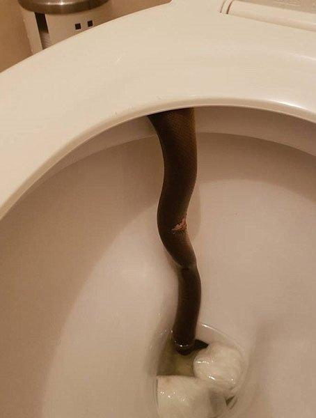 Tuvalete kapağını açtı! Neye uğradığını şaşırdı