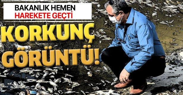 Aydın'da korkunç görüntü!