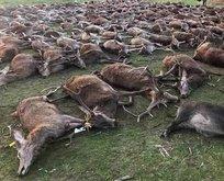 Resmen katliam yaptılar! 540 yabani hayvanı...