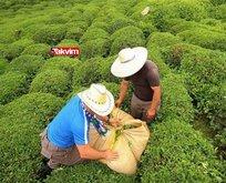 Yaş çay alım fiyatı ne kadar oldu 2021?