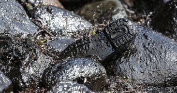 Şile sahilindeki korkutan iddia gerçek çıktı!
