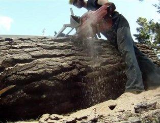 Bunu yapması için sadece bir ağaç gövdesi yetti! Görenlerin ağzı açık kaldı...