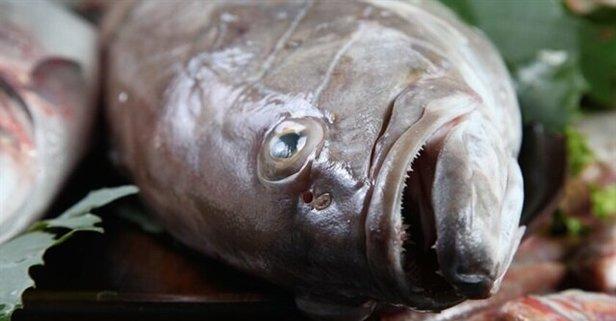 Lagos balığı nedir? Lagos balığı fiyatı ne kadar?