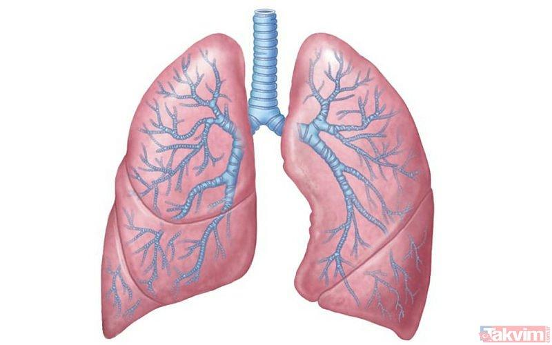 Akciğer Kanseri Nedir Akciğer Kanserinin Nedenleri Ve Belirtileri