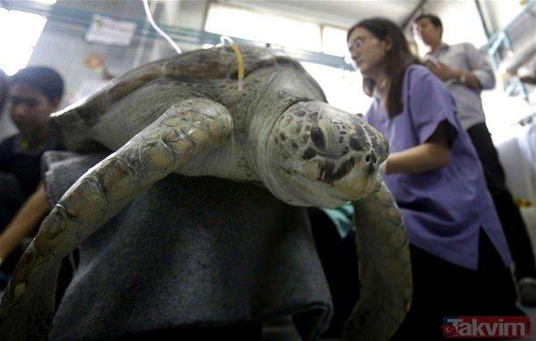 Kaplumbağanın midesinden çıkanlar şok etti