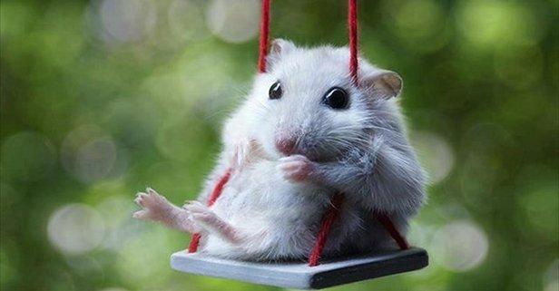 Rüyada fare görmek ne anlama gelir? | Rüyada farenin ısırdığını görmek, fare kovalamak neye yorumlanır?