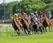 Şampiyon atlara tedbir