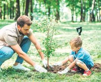 Ağaç dikene arazi devletten