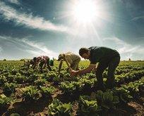 Çiftçilere büyük müjde!