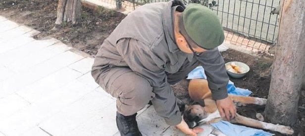 Yaralı köpeğe jandarma şefkati